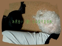 2012_0519_214923_922.jpg