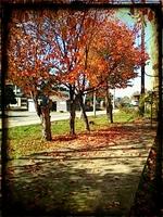 2012_1027_114629_069_Rustic.jpg