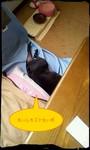 2012_0603_150317_505_Tiny-picsay.jpg